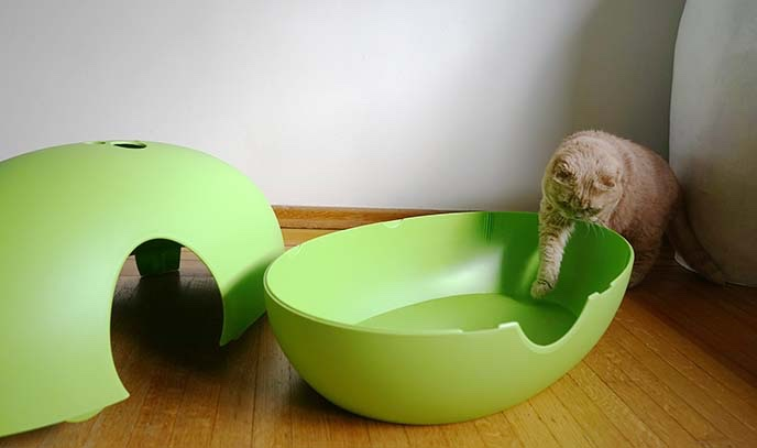 Luxury green poopoopeedo cat litter box chelsea cats - Modern kitty litter box ...