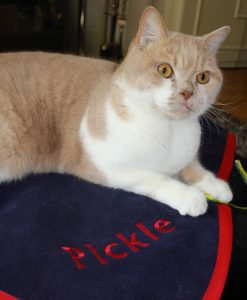 Luxury Personalised Cat Blanket Navy/Red