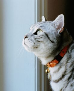 Cheshire and Wain Luxury Orange Leather Cat Collar