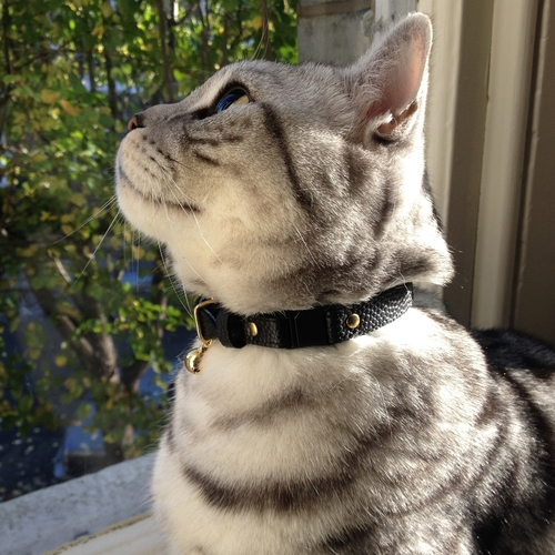 Cheshire and Wain The Beluga Caviar Luxury Leather Cat Collar