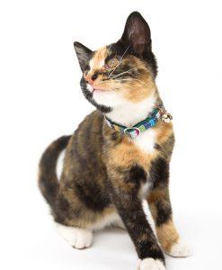 Kikoy Marine Stripe Cat Collar by Hiro and Wolf