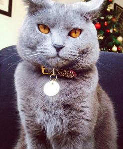 Red & Bronze cheshire and wain cat collar