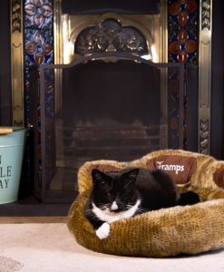 Teddy Bear Paw Cat Bed