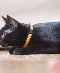 Corduroy Cat Collar – Mustard