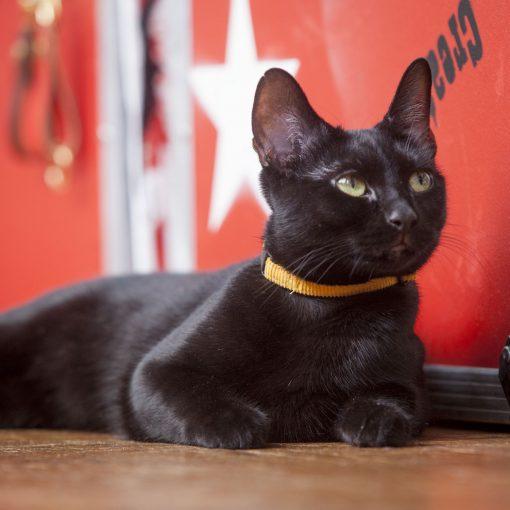 Corduroy Cat Collar – Mustard