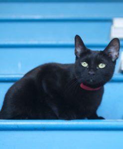 Corduroy Cat Collar – Red