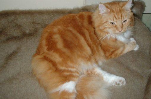 Luxury Honey Blonde Faux Fur Cat Blanket