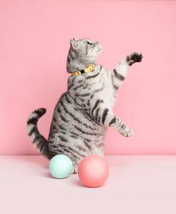 Luxury Lemon Sorbet Cat Collar
