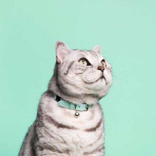 Luxury Mint Green Cat Collar