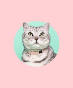 Luxury Candyfloss Pink Cat Collar