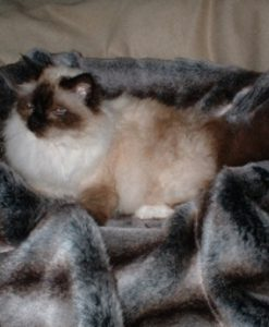Luxury Chinchilla Faux Fur Cat Blanket