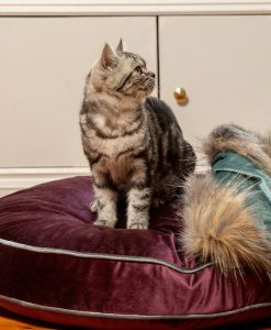 Luxury Grape Velvet Cat Cushion Bed