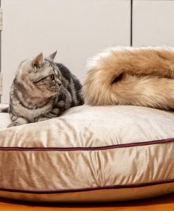 Luxury Mushroom Velvet Cat Cushion Bed