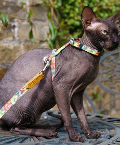 Over The Rainbow Vegan Cat Harness