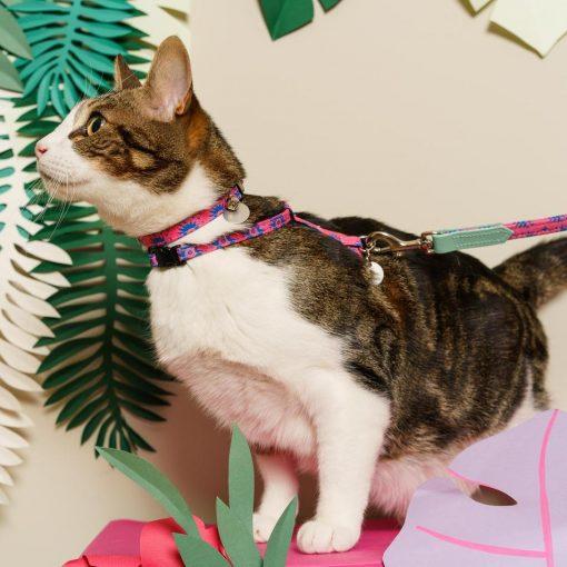 Nebula Vegan Breakaway Cat Collar