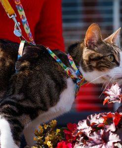 Over The Rainbow Vegan Breakaway Cat Collar