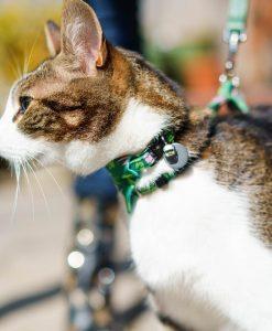 Combs Vegan Breakaway Cat Collar