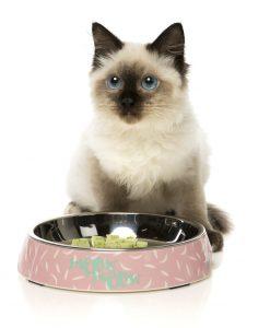 FuzzYard Featherstorm Cat Feeding Bowl