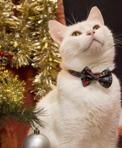 Christmas Snowflakes Cat Bow Tie